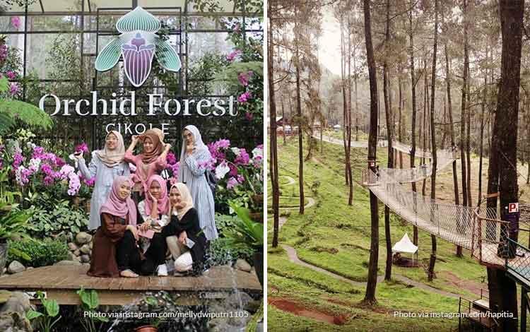 Orchid Forest Cikole - Tempat Wisata Favorit di Bandung