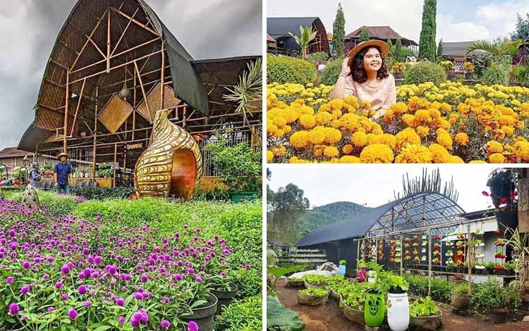 Tempat romantis di Bandung - Kebun Begonia Lembang