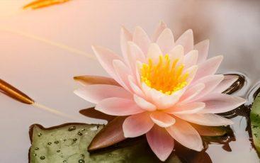 Bunga Yang Sesuai dengan Zodiak Kamu