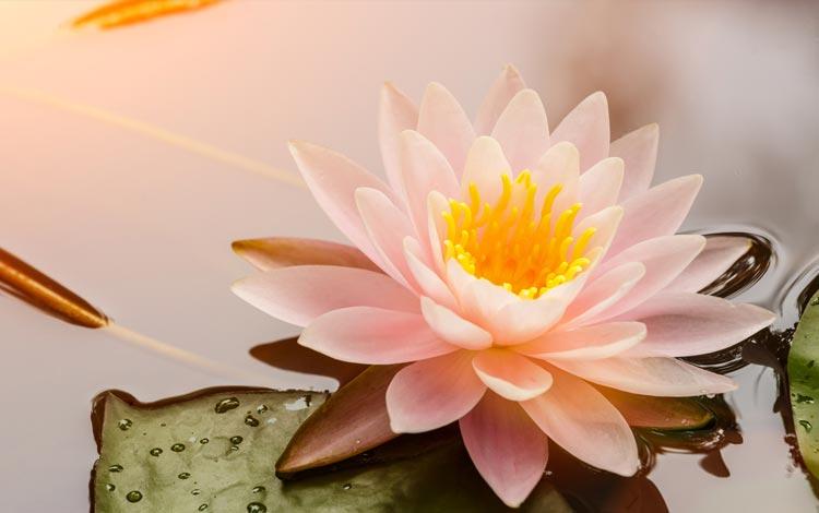Mau Tahu Jenis Bunga Yang Sesuai Dengan Zodiak Kamu? Cari Tahu Yuk, di Sini!